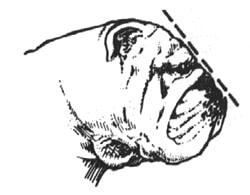 Cabeza Lado